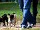 deiezioni canine multe