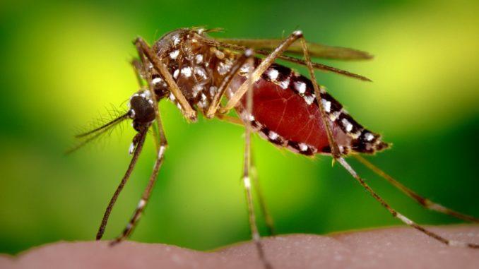vanzaghello virus zanzara