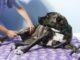 fisioterapia cani albizzate