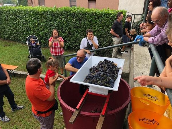 piagiatura uva vino
