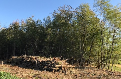 busto taglio bosco 1