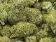 gallarate marijuana spaccio