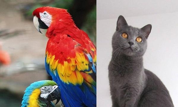 uccelli gatti malpensafiere