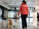 Pet therapy malpensa