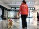 Pet therapy malpensa