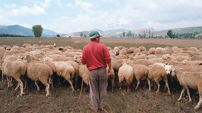 nosate pastore scomparso