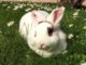 busto conigli animalisti