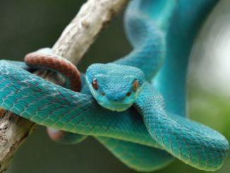 milano reptiles meeting