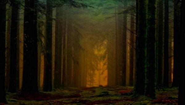 camminata bosco gaggio