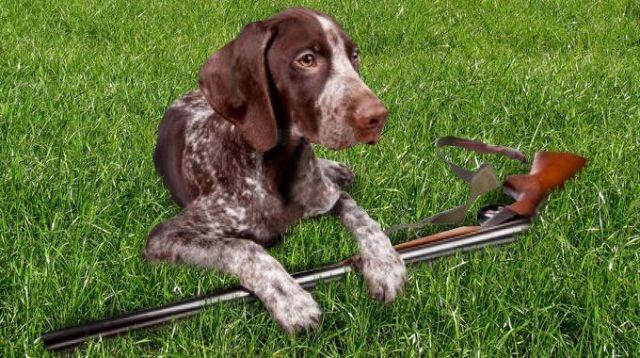 germania cane fucile