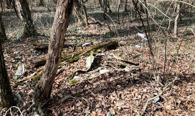 Eternit boschi somma bonifica
