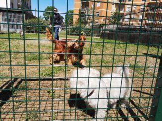 area cani gallarate cassani
