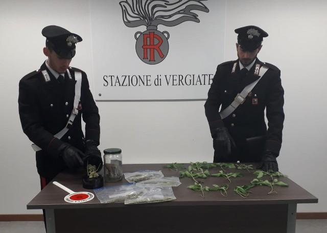 sesto piantagione marijuana arresto
