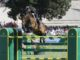 talent show jumping etrea