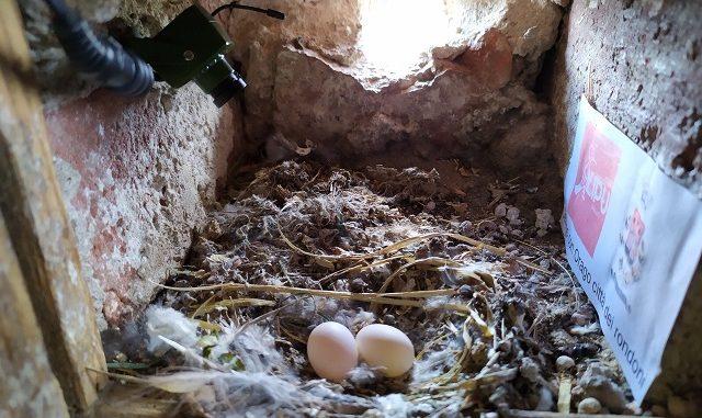 lipu jerago nido rondini
