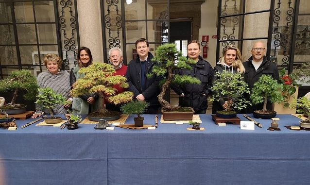 mostra bonsai gallarate piante