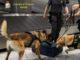 Cocaina valigia arrestato malpensa