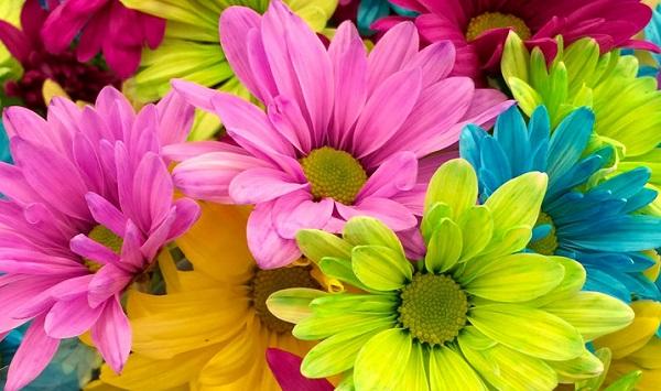 auser festa fiori tessile