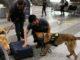 malpensa eroina cani antidroga