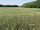 olgiate erba alta ambiente