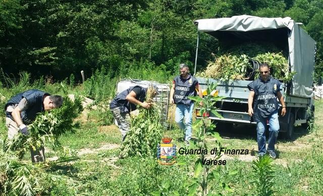 Varese sequestro piante marijuana
