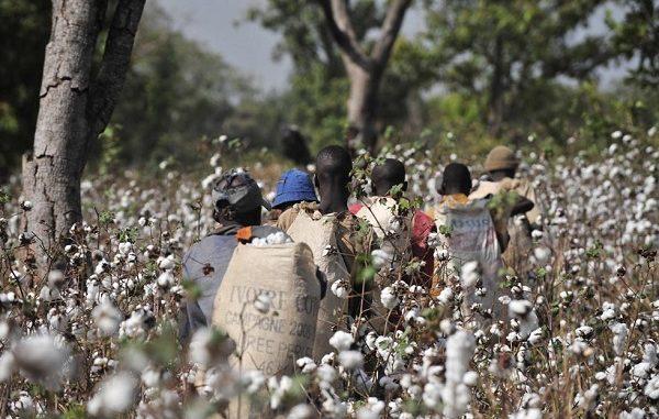 costa avorio cotone contadini