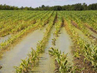 danni agricoltura coldiretti varese