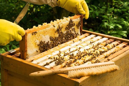 miele coldiretti varese produzione