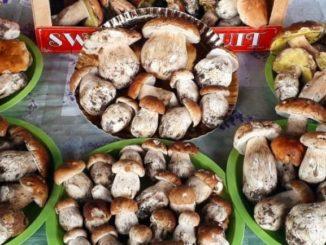 Funghi raccolta coldiretti varese