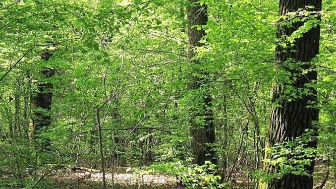 bosco parco ticino