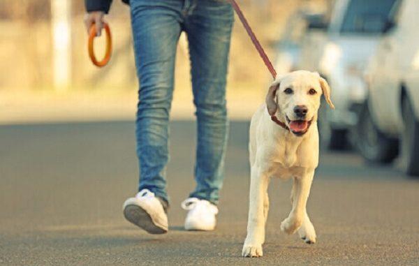 camminata zampe canile busto