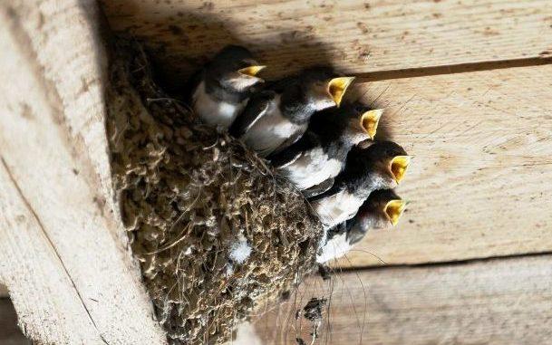 Rondoni Jerago Convegno Ornitologia