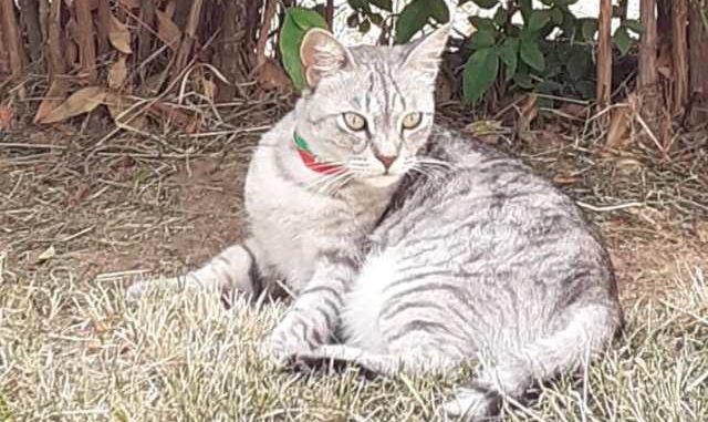 malpensa gattina luisella
