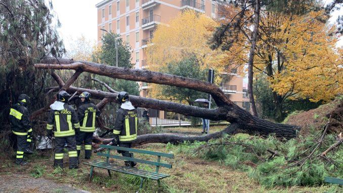 castellanza albero vigili fuoco