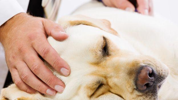 ferno cane avvelenato