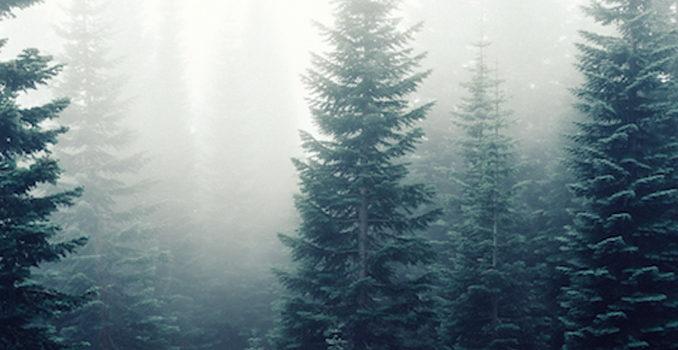 foreste cambiamenti climatici