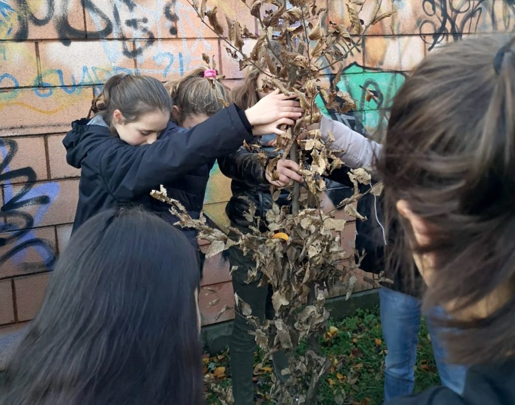 olgiate albero studenti adotta