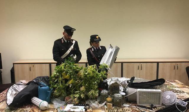 castellanza serra marijuana arrestato