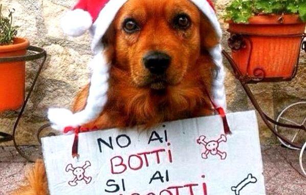 sindaco botti cani capodanno