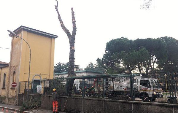 legnano alberi abbattuti parco mazzini