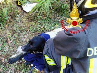 salvataggio cane travedona monate