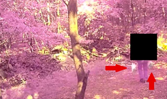 Rifiuti boschi fototrappole Samarate