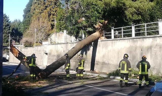 albero abbattuto vento somma