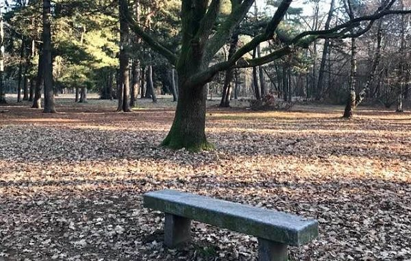 legnano verdi parco altomilanese