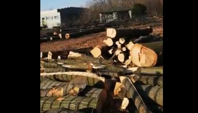 disboscamento cardano assessore marana