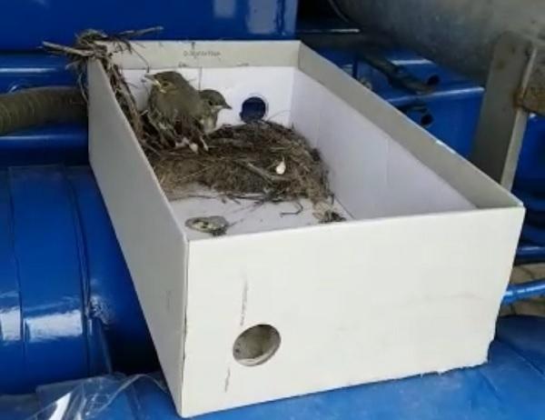 arluno nido pulcini autocisterna