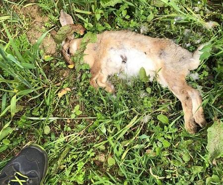 parco altomilanese conigli torture denuncia