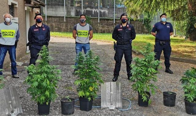 piante marijuana viggiù