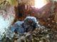 jerago webcam rondonaia diretta