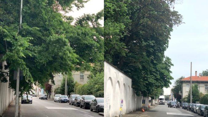 busto via bellini alberi
